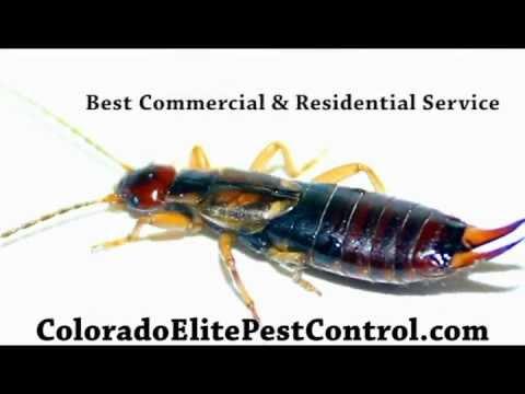 Colorado Elite Pest Control Service Company - Denver Boulder Westminster Exterminator