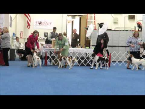 Alana Day - Toph Show Debut - Brittany Specialty Show