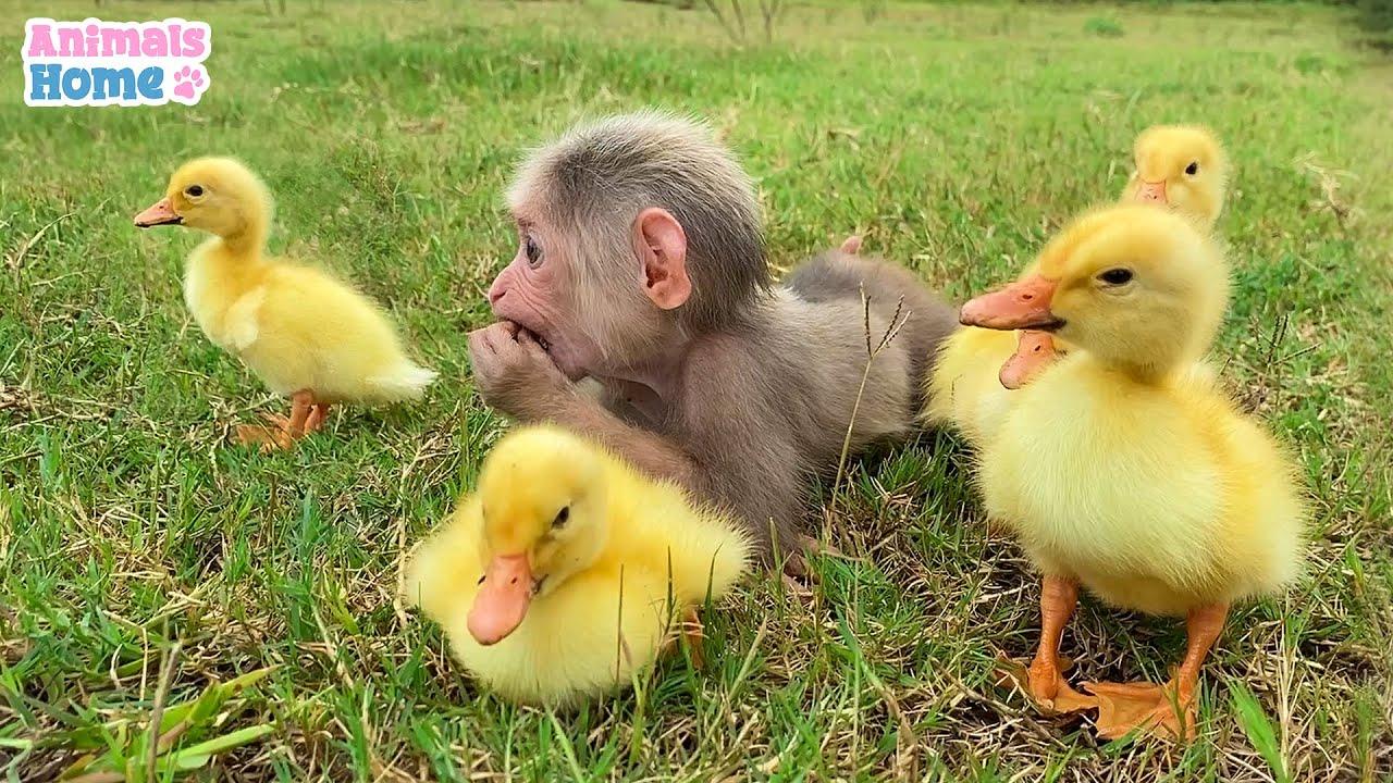 Sweet moments of monkey BiBi and friends