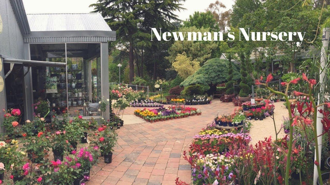 Newman S Nursery The Topiary Cafe South Australia