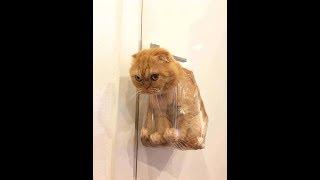 Chó và Mèo dễ thương, hài hước, vui nhộn nhất hành tinh #9 | Pet TV (Funny Cute Animals)