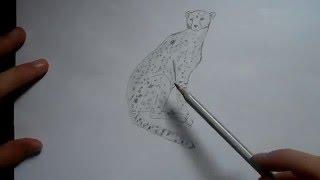 Видео: как нарисовать леопарда?(обучающее видео по рисованию леопарда простым карандашом поэтапно для начинающих., 2015-12-27T15:48:44.000Z)