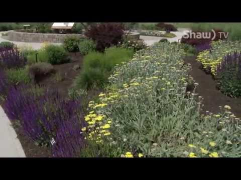 Xeriscaping in the Okanagan
