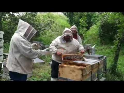Kestane balı hazırlanışı