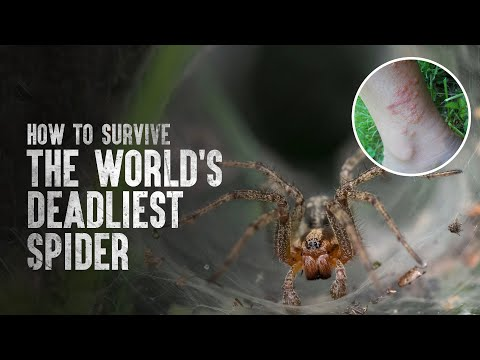 How to Survive the World's Deadliest Spider