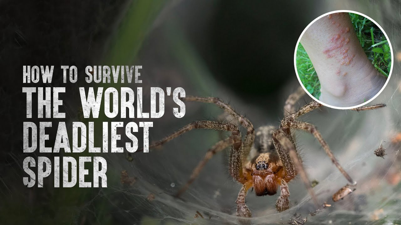 Download How to Survive the World's Deadliest Spider