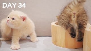 Day 34 - Playful Cute Baby Kittens   Day 1 to Day 100 Kittens Grow Up Vlog