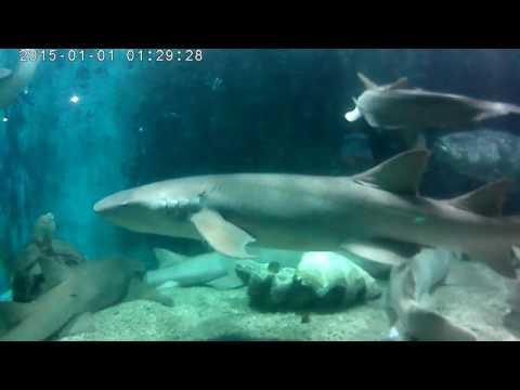Shenzhen ocean world A