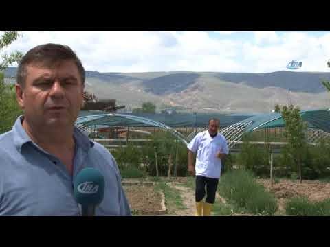 Sülükler Kayseri'de Üretilip Dünyaya Pazarlanıyor