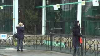 видео В зоопарке Санкт-Петербурга на свет появились двое детенышей ягуара