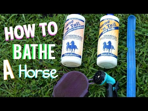 How To Bathe A Horse