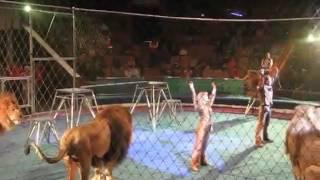 Цирк..... Ужасы..... Схватка.... Еда львам