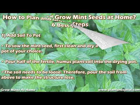 6 Great Ways To Grow Mints At Home: Planting, Watering & More