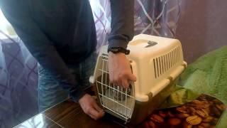 Недорогая удобная клетка переноска для кошек и собак  vision