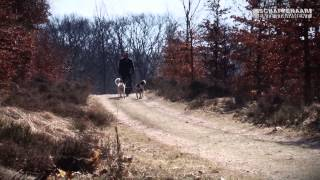 Best Sled Dog Training Veluwe (apeldoorn) 2013 2015