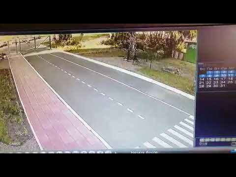 Лось бегал по территории детского сада в Новосибирске