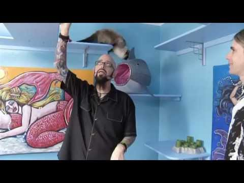 My cat from hell season 5 episode 13 jackson galaxy our for Jackson galaxy band