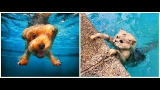 Кошки и Собаки Падают в Воду! Забавная Видео Подборка / Funny Cats and Dogs /