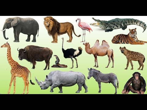 55 Animals Names in Sanskrit & Hindi