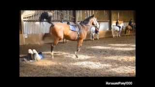 Horse Falls Fails #1