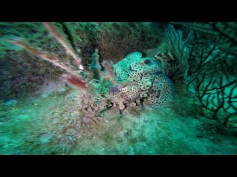 10-10-16 B & B Barge Dive