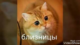 Кто ты по гороскопу из кошек