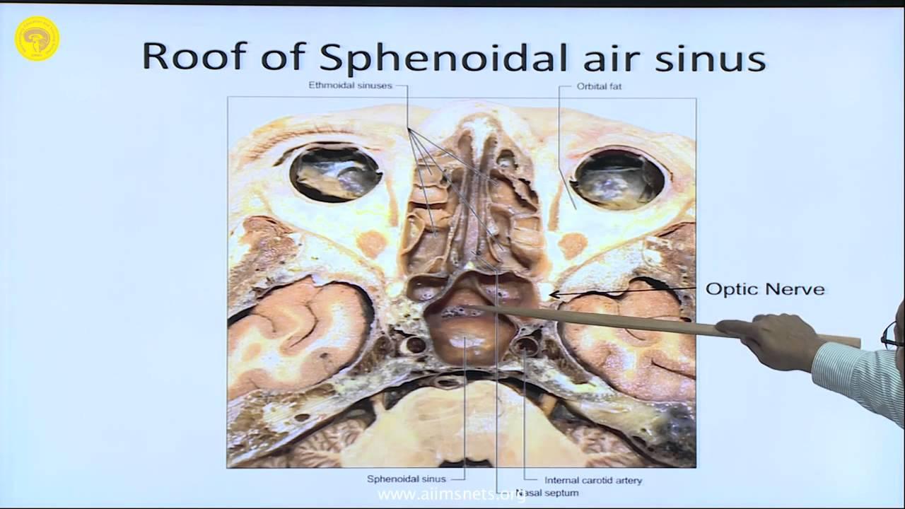 Anatomy of Sella and Skull Base - YouTube