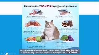 31. Натуральное питание кошки. Рецепты для вашего любимца
