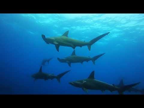 Karan's Galapagos Diving Adventure Highlights