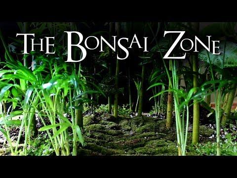 Planting a Miniature Rainforest, Kapok Bonsai Seedling Update, Part 2, April 2018