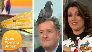 The Best of I'm a Celebrity and Some Visiting Jungle Friends | Good Morning Britain