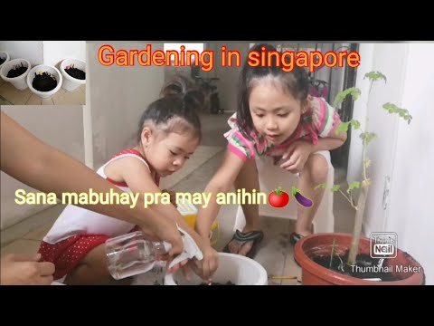 THIS IS HOW WE DO OUR GARDENING IN SINGAPORE || VEGETABLES || FAMILY BONDING