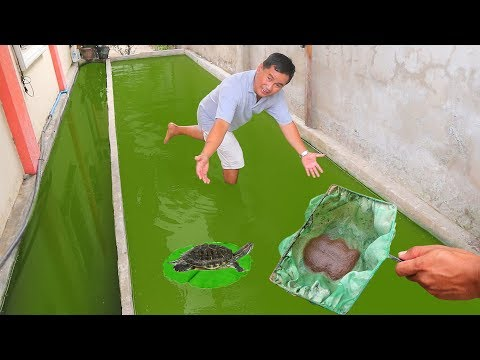 Feeding The Tiniest Live-food On Green Water Tank
