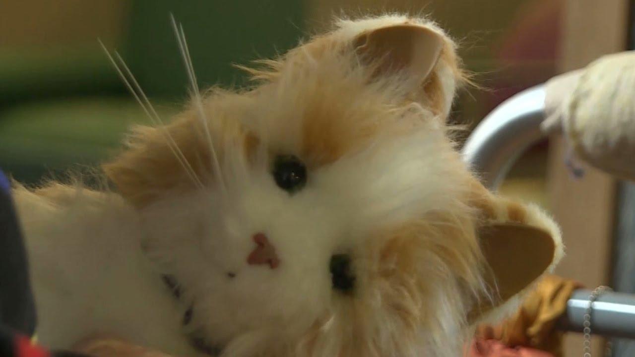 Robotic pets bring joy to nursing home in New York