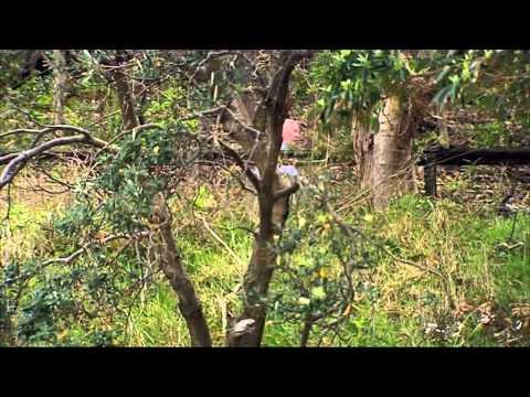 Sydney Weekender visits Sydney Harbour National Park
