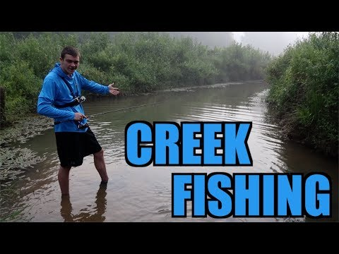 Kentucky Creek Fishing!