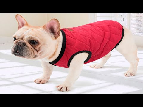 Теплая накидка для собаки PET ARTIST/dog Clothes с AliExpress РАСПАКОВКА