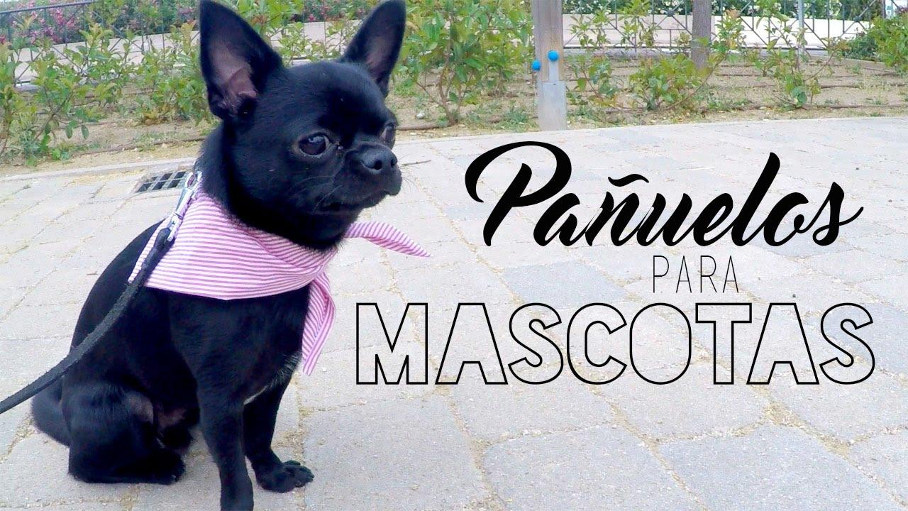 Pañuelo para mascotas sin coser ♡ DIY ❀ #Manualidades || Likesely ...