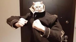 (Re-Upload) BEST CAT MEMES COMPILATION OF 2020 PART 16 (FUNNY CATS)