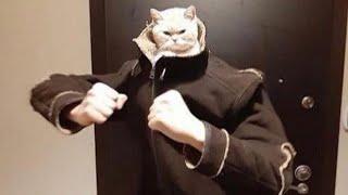(ReUpload) BEST CAT MEMES COMPILATION OF 2020 PART 16 (FUNNY CATS)