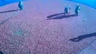 Punjabi uncles  in crain berry farm