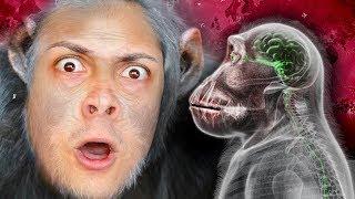 how monkeys became SMARTER than HUMANS (Plague Inc Evolved)