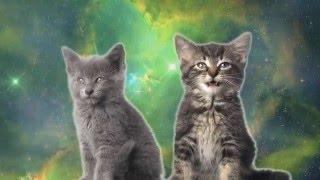 Space cat-Коты поют-Песня котиков.