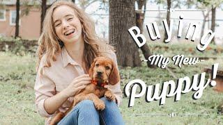 Picking Up My New PUPPY! + Puppy Haul | Irish Setter