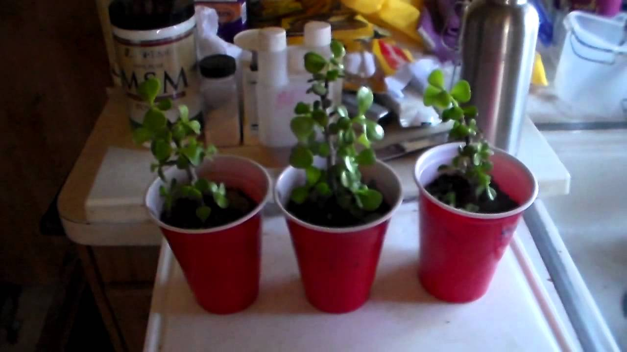 an experiment conducted to determine how plants grow in the presence of salt water Or multicellular plants that can grow several for this experiment, you will need purified water a chemistry experiment for the extraction of salt from.