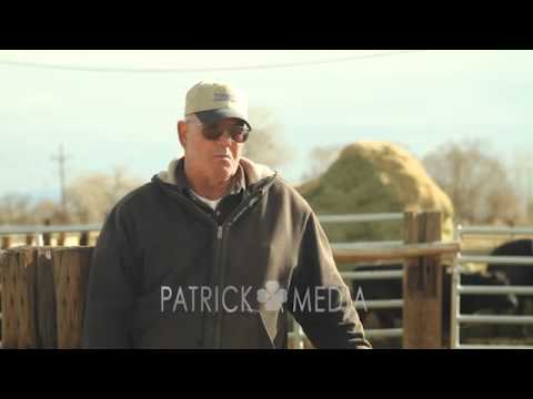 Fallon Cattle Auction 2014