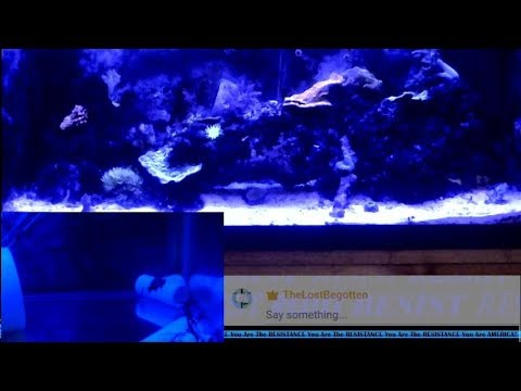 HD Multi-Camera Reef/Marine #Fishroom Quarantine While Discussing Final Fantasy 13 (Part 5) 04.24.18