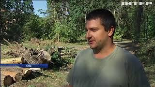 Буревій повиривав з корінням дерева у Києві