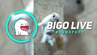 Bigo Live #FunStuff