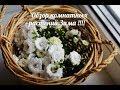 Обзор комнатных растений Декабрь 2018 mp3